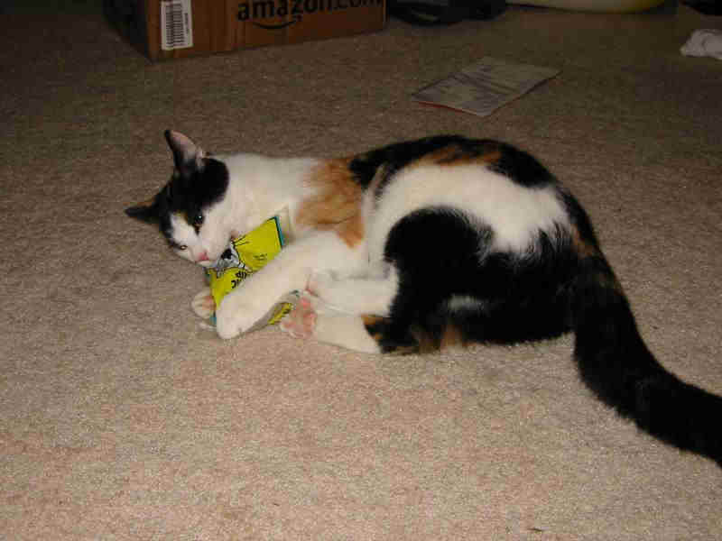 Cats and effects of catnip research paper
