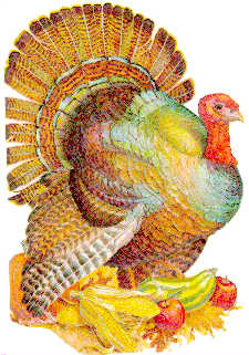 Animal insider because animals are people too why do for Why do we eat turkey on thanksgiving